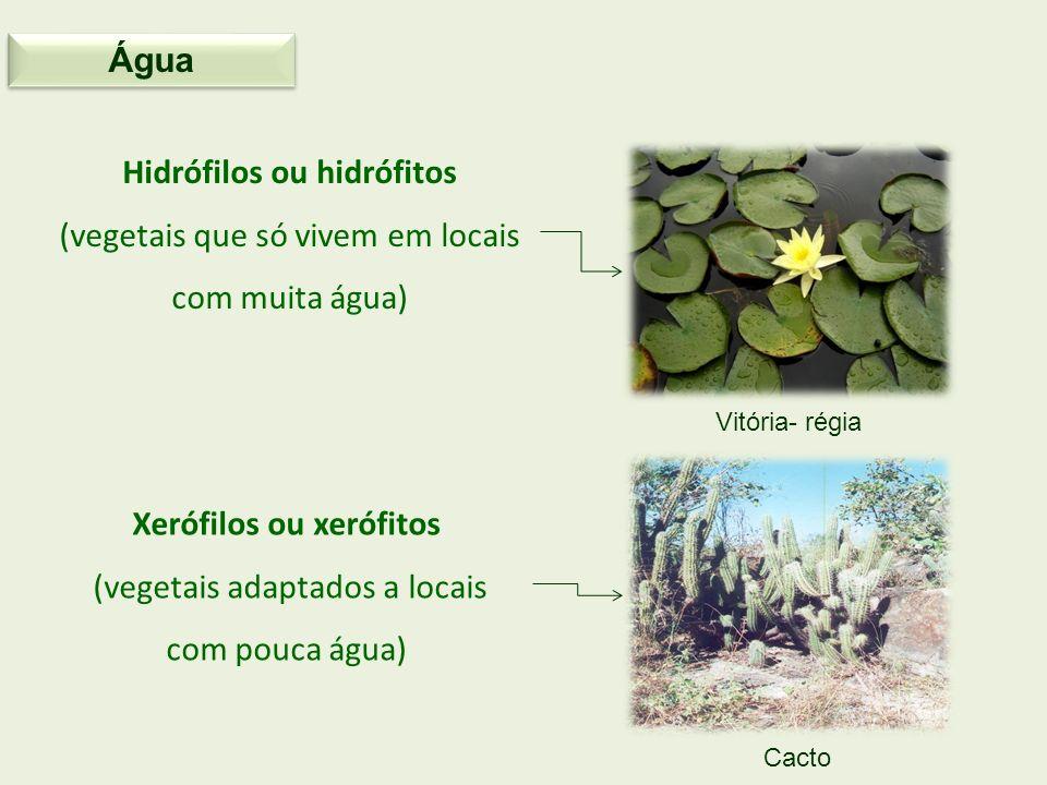 Hidrófilos ou hidrófitos (vegetais que só vivem em locais com muita água) Xerófilos ou xerófitos (vegetais adaptados a locais com pouca água) Vitória-