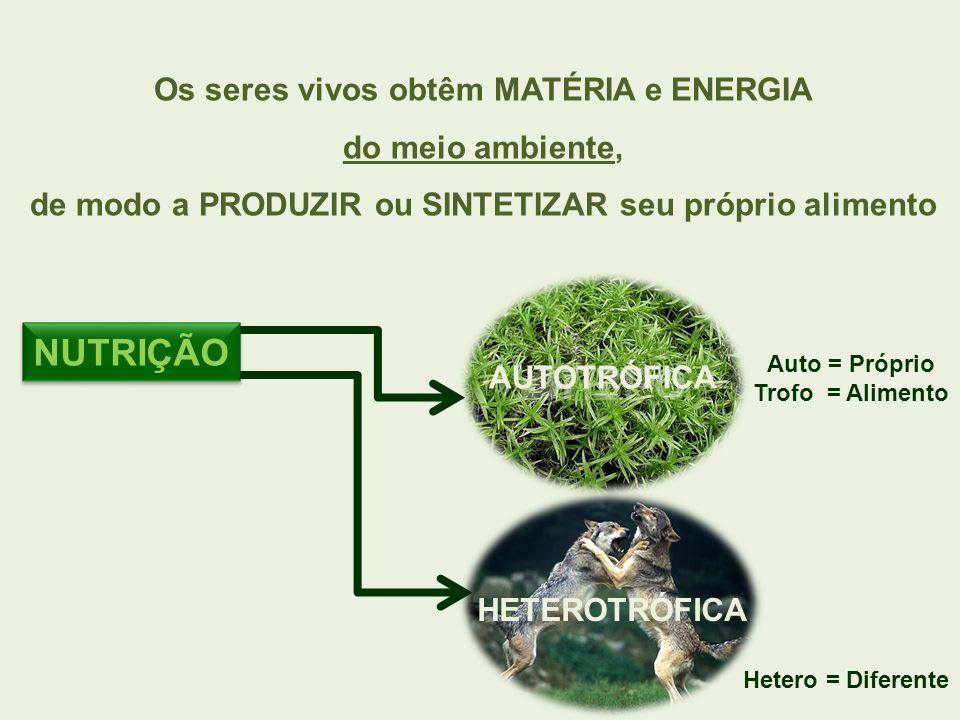 NUTRIÇÃO Os seres vivos obtêm MATÉRIA e ENERGIA do meio ambiente, de modo a PRODUZIR ou SINTETIZAR seu próprio alimento AUTOTRÓFICA HETEROTRÓFICA Auto