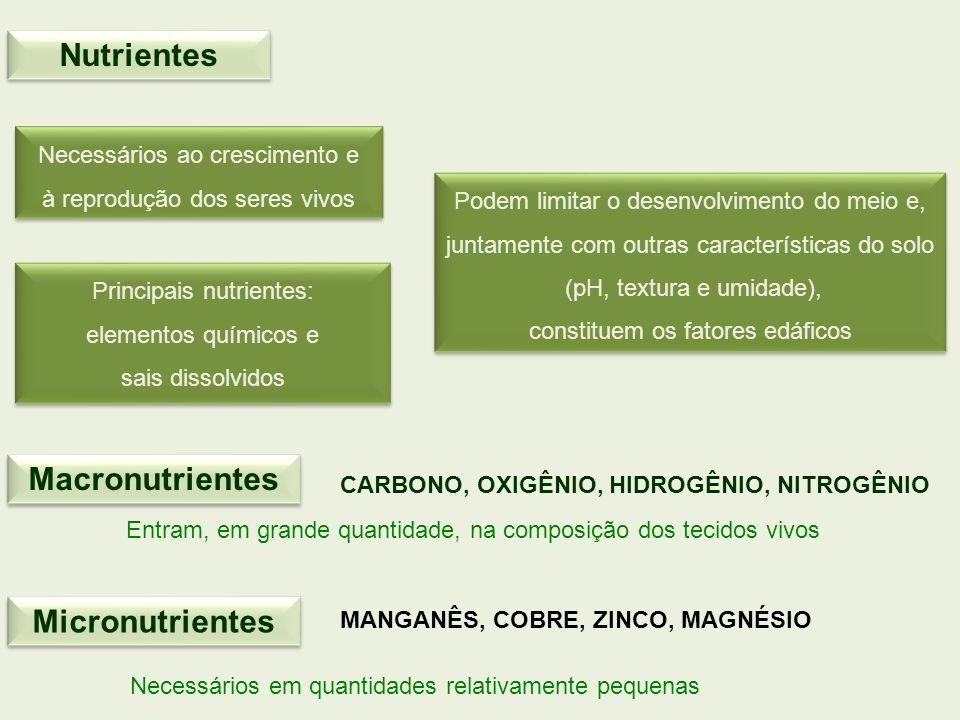 Nutrientes Necessários ao crescimento e à reprodução dos seres vivos Necessários ao crescimento e à reprodução dos seres vivos Principais nutrientes: