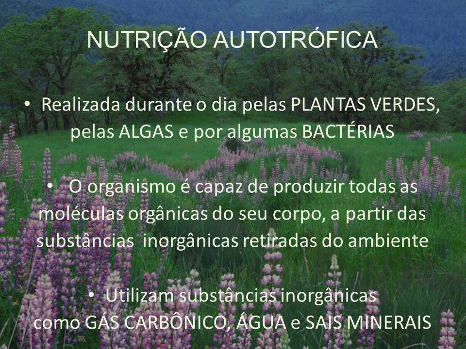 NUTRIÇÃO AUTOTRÓFICA Realizada durante o dia pelas PLANTAS VERDES, pelas ALGAS e por algumas BACTÉRIAS O organismo é capaz de produzir todas as molécu