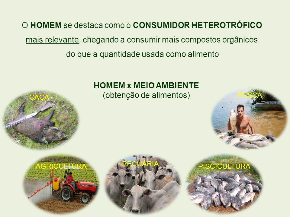 CAÇAPESCA PISCICULTURA PECUÁRIA AGRICULTURA O HOMEM se destaca como o CONSUMIDOR HETEROTRÓFICO mais relevante, chegando a consumir mais compostos orgâ