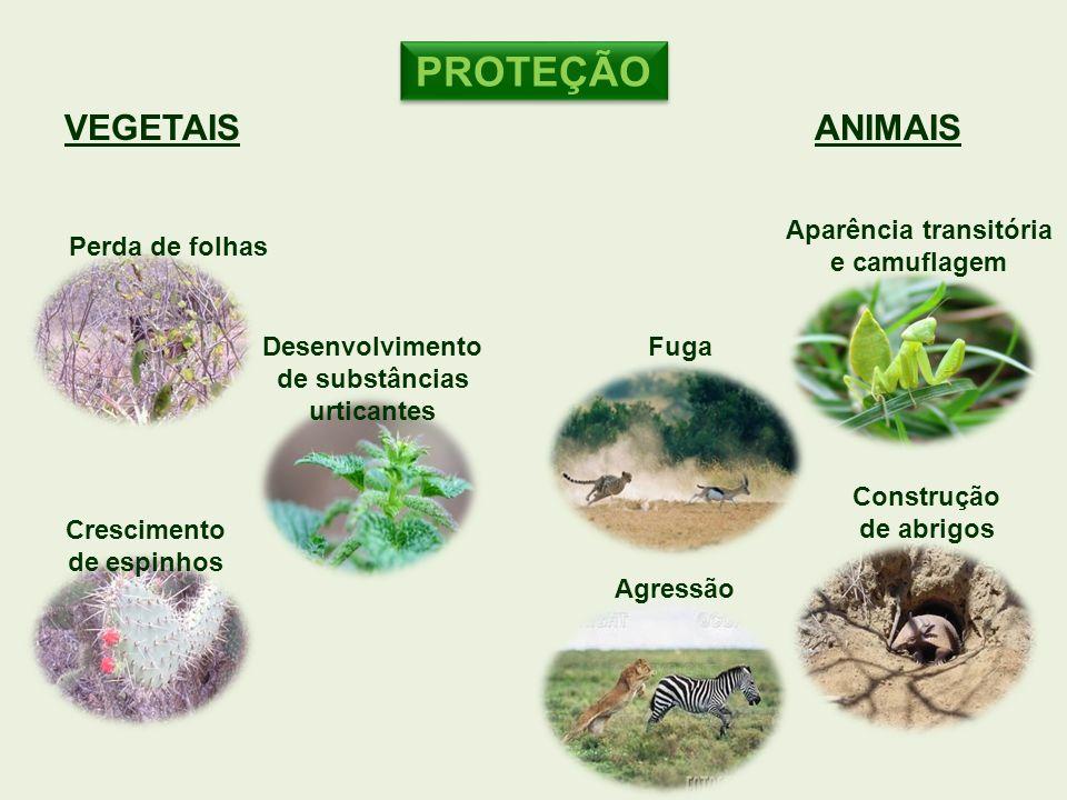 VEGETAIS Crescimento de espinhos Perda de folhas Desenvolvimento de substâncias urticantes PROTEÇÃO ANIMAIS Aparência transitória e camuflagem Constru