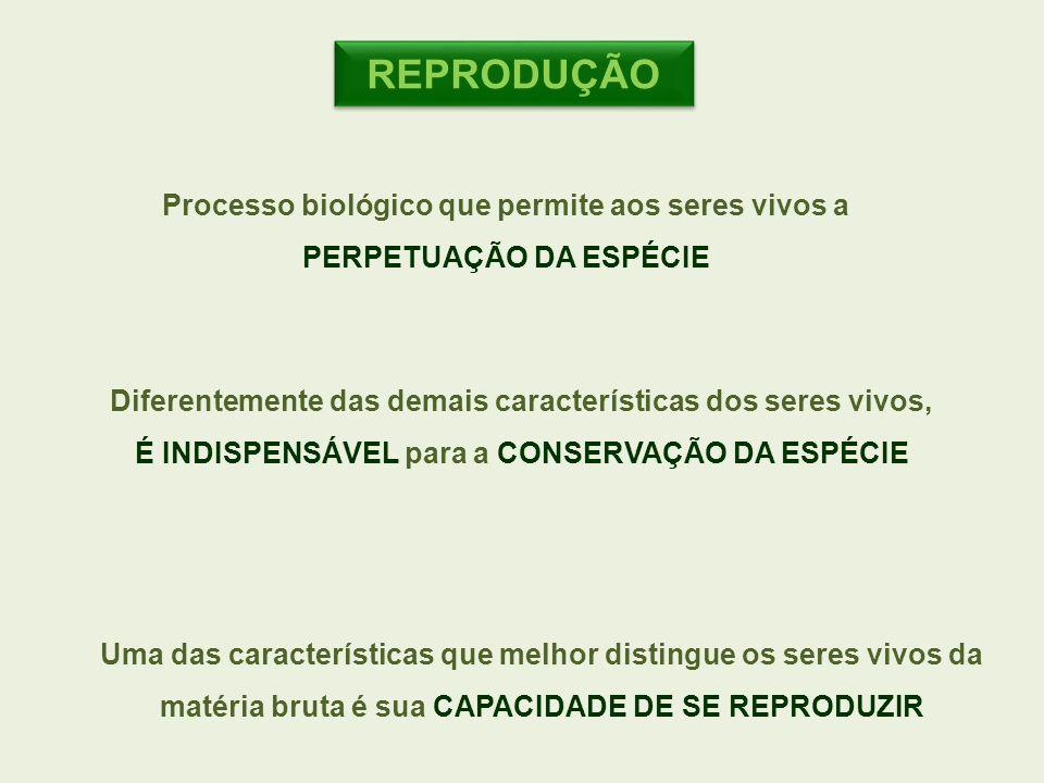 REPRODUÇÃO Processo biológico que permite aos seres vivos a PERPETUAÇÃO DA ESPÉCIE Diferentemente das demais características dos seres vivos, É INDISP