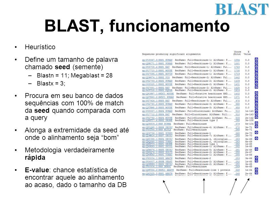 Bases de dados BLAST Apresentam um formato especial As sequências no formato FASTA devem ser formatadas usando um programa especial (formatdb) –Cria uma base de dados com todas as seeds possíveis e as sequências que as contém –Dados da base de dados estão pré-computados (velocidade) O BLAST então pode comparar uma sequência FASTA de entrada com o banco de dados pronto >gi|188497754|ref|NP_000179.2| hexokinase 1 isoform HKI [Homo sapiens] MIAAQLLAYYFTELKDDQVKKIDKYLYAMRLSDETLIDIMTRFRKEMKNGLSRDFNPTATVKMLPTFVRS IPDGSEKGDFIALDLGGSSFRILRVQVNHEKNQNVHMESEVYDTPENIVHGSGSQLFDHVAECLGDFMEK RKIKDKKLPVGFTFSFPCQQSKIDEAILITWTKRFKASGVEGADVVKLLNKAIKKRGDYDANIVAVVNDT VGTMMTCGYDDQHCEVGLIIGTGTNACYMEELRHIDLVEGDEGRMCINTEWGAFGDDGSLEDIRTEFDRE IDRGSLNPGKQLFEKMVSGMYLGELVRLILVKMAKEGLLFEGRITPELLTRGKFNTSDVSAIEKNKEGLH NAKEILTRLGVEPSDDDCVSVQHVCTIVSFRSANLVAATLGAILNRLRDNKGTPRLRTTVGVDGSLYKTH PQYSRRFHKTLRRLVPDSDVRFLLSESGSGKGAAMVTAVAYRLAEQHRQIEETLAHFHLTKDMLLEVKKR MRAEMELGLRKQTHNNAVVKMLPSFVRRTPDGTENGDFLALDLGGTNFRVLLVKIRSGKKRTVEMHNKIY AIPIEIMQGTGEELFDHIVSCISDFLDYMGIKGPRMPLGFTFSFPCQQTSLDAGILITWTKGFKATDCVG HDVVTLLRDAIKRREEFDLDVVAVVNDTVGTMMTCAYEEPTCEVGLIVGTGSNACYMEEMKNVEMVEGDQ GQMCINMEWGAFGDNGCLDDIRTHYDRLVDEYSLNAGKQRYEKMISGMYLGEIVRNILIDFTKKGFLFRG QISETLKTRGIFETKFLSQIESDRLALLQVRAILQQLGLNSTCDDSILVKTVCGVVSRRAAQLCGAGMAA VVDKIRENRGLDRLNVTVGVDGTLYKLHPHFSRIMHQTVKELSPKCNVSFLLSEDGSGKGAALITAVGVR LRTEASS BlastDB Query and Subject
