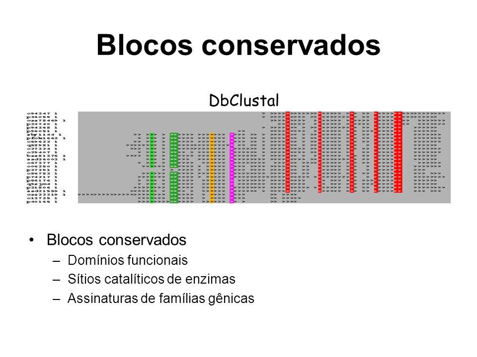 Blocos conservados DbClustal Blocos conservados –Domínios funcionais –Sítios catalíticos de enzimas –Assinaturas de famílias gênicas