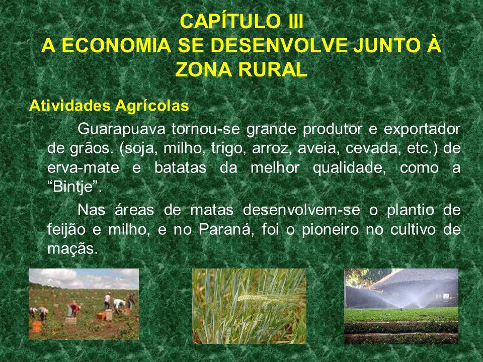 CAPÍTULO III A ECONOMIA SE DESENVOLVE JUNTO À ZONA RURAL Atividades Agrícolas Guarapuava tornou-se grande produtor e exportador de grãos. (soja, milho