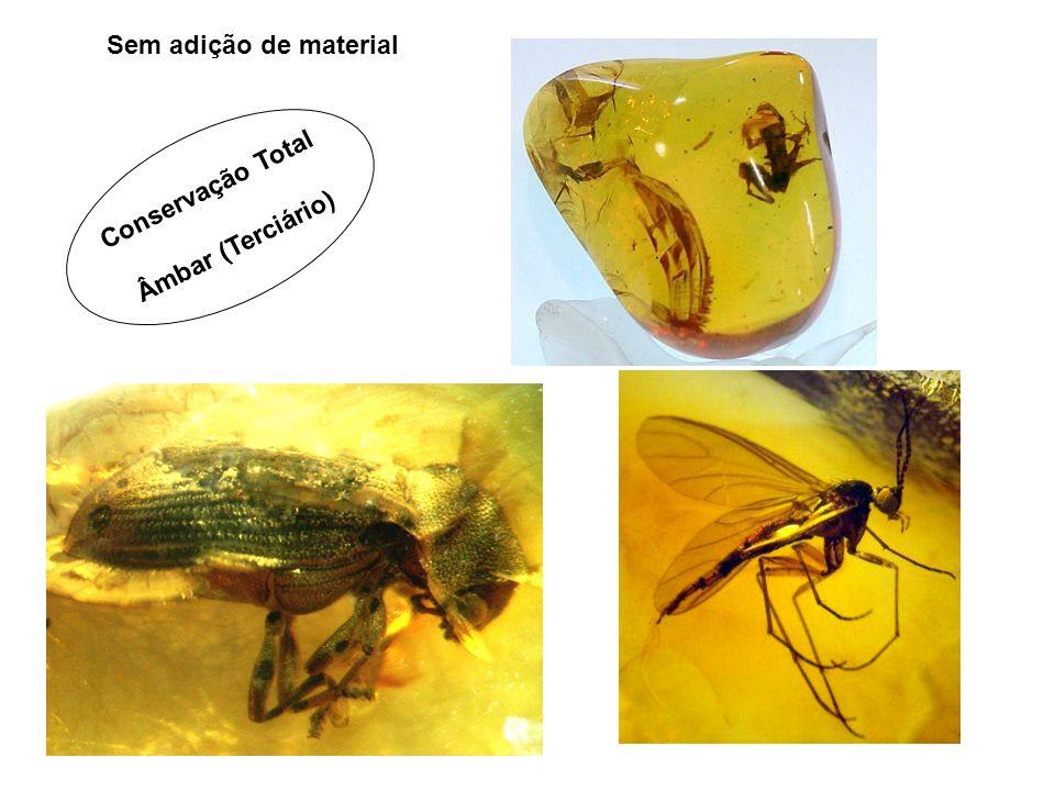 Conservação Total Âmbar (Terciário) Sem adição de material