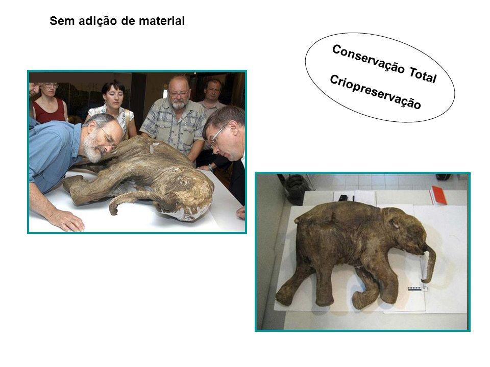 Conservação Total Criopreservação Sem adição de material