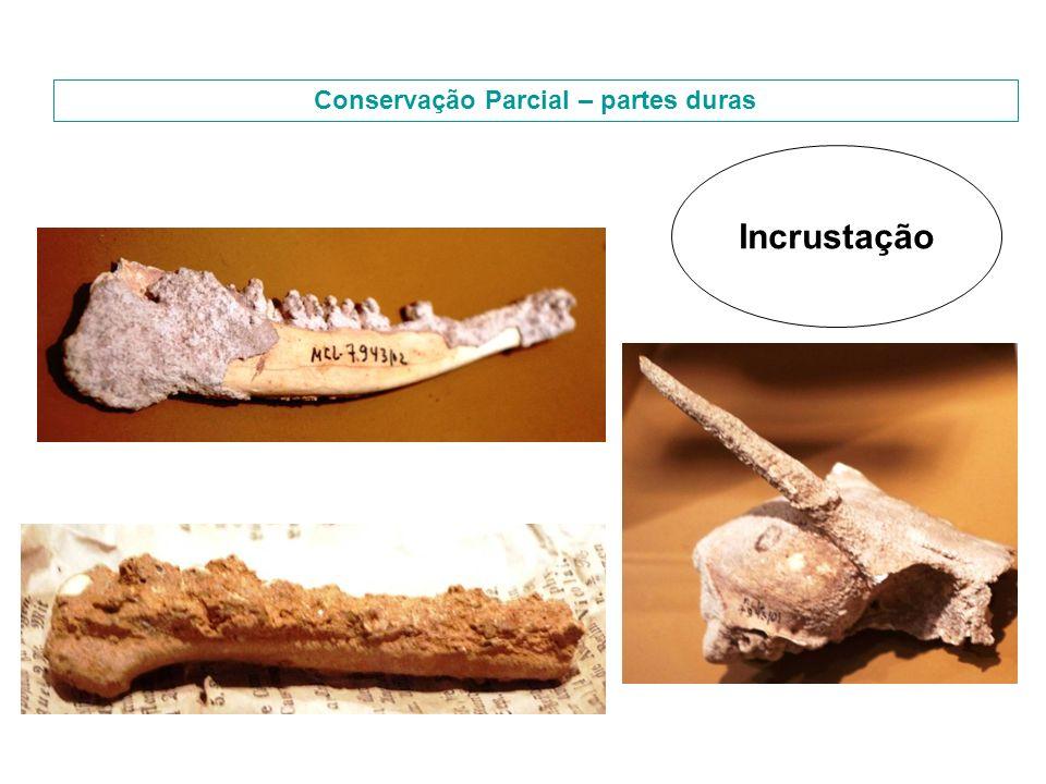 Conservação Parcial – partes duras Incrustação