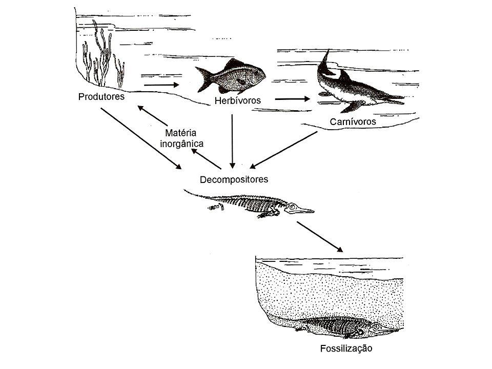 Tipos de fossilização Vestígios (icnofóssil): pegadas, coprólitos, impressão, molde, contramolde; Restos (somatofóssil): –Partes duras: De Sílica (SiO2): espículas de algumas esponjas; De carbonato de cálcio (CaCO3): –calcita ou aragonita: placas esqueléticas de equinodermas e conchas de moluscos; –de quitina: exoesqueleto dos insetos; Restos vegetais apresentam-se sempre dissociados no registro fóssil, dificultando o estuda da planta como um organismo completo.