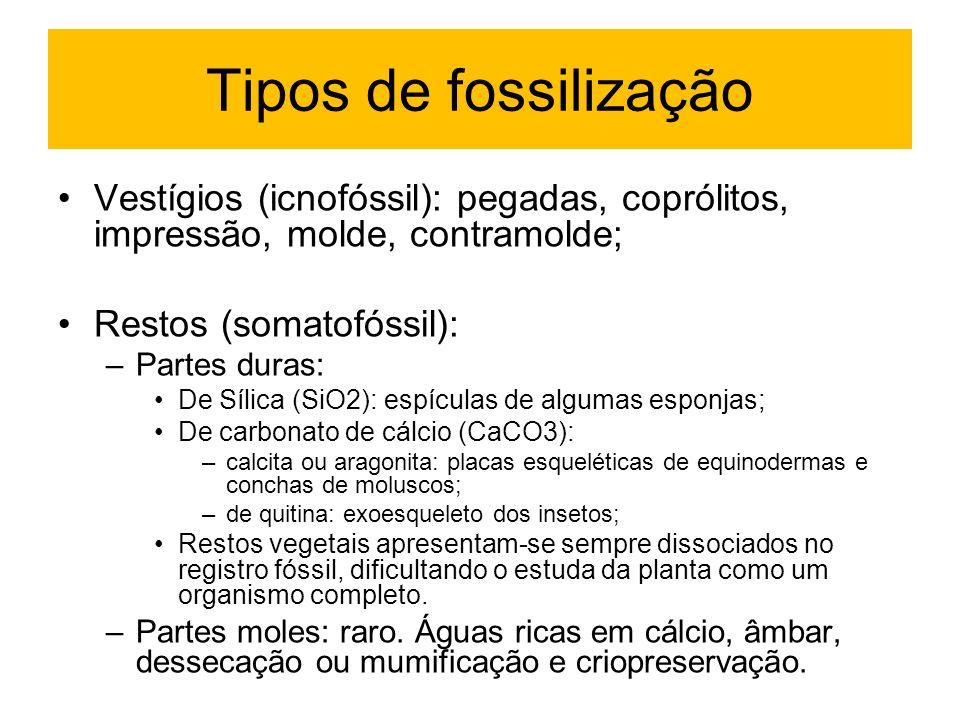 Tipos de fossilização Vestígios (icnofóssil): pegadas, coprólitos, impressão, molde, contramolde; Restos (somatofóssil): –Partes duras: De Sílica (SiO
