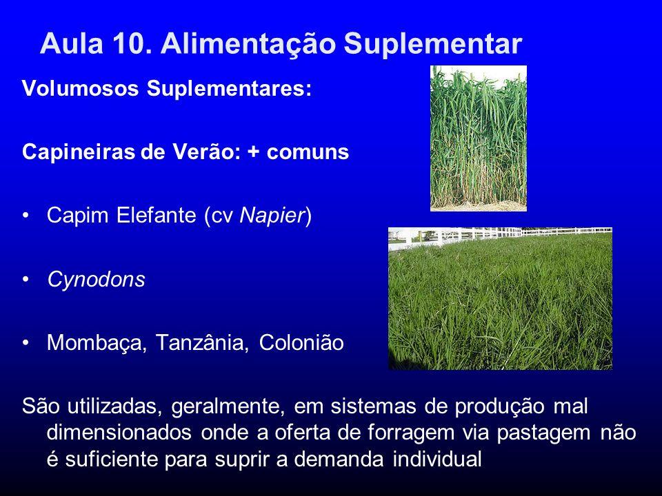 Aula 10. Alimentação Suplementar Volumosos Suplementares: Capineiras de Verão: + comuns Capim Elefante (cv Napier) Cynodons Mombaça, Tanzânia, Coloniã