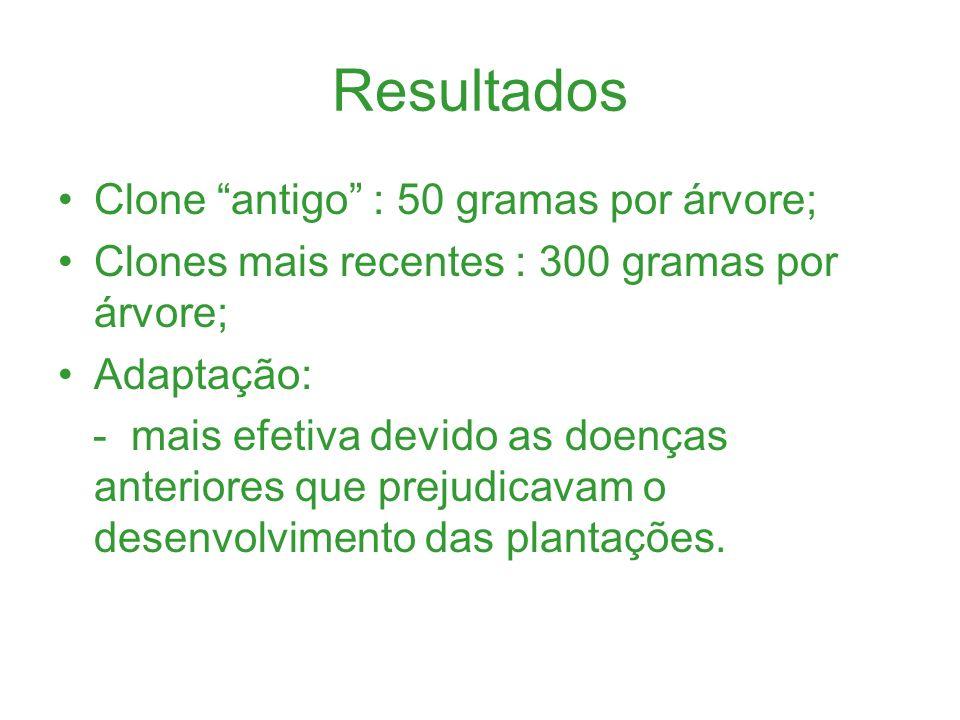 Resultados Clone antigo : 50 gramas por árvore; Clones mais recentes : 300 gramas por árvore; Adaptação: - mais efetiva devido as doenças anteriores q