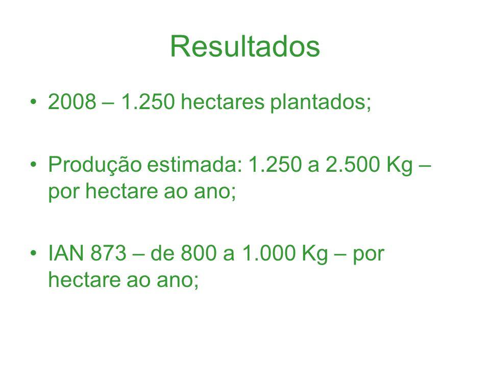 Resultados 2008 – 1.250 hectares plantados; Produção estimada: 1.250 a 2.500 Kg – por hectare ao ano; IAN 873 – de 800 a 1.000 Kg – por hectare ao ano