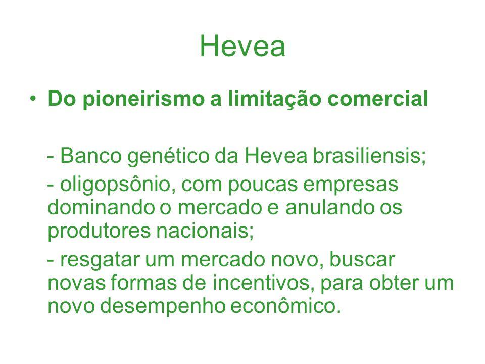 Hevea Do pioneirismo a limitação comercial - Banco genético da Hevea brasiliensis; - oligopsônio, com poucas empresas dominando o mercado e anulando o