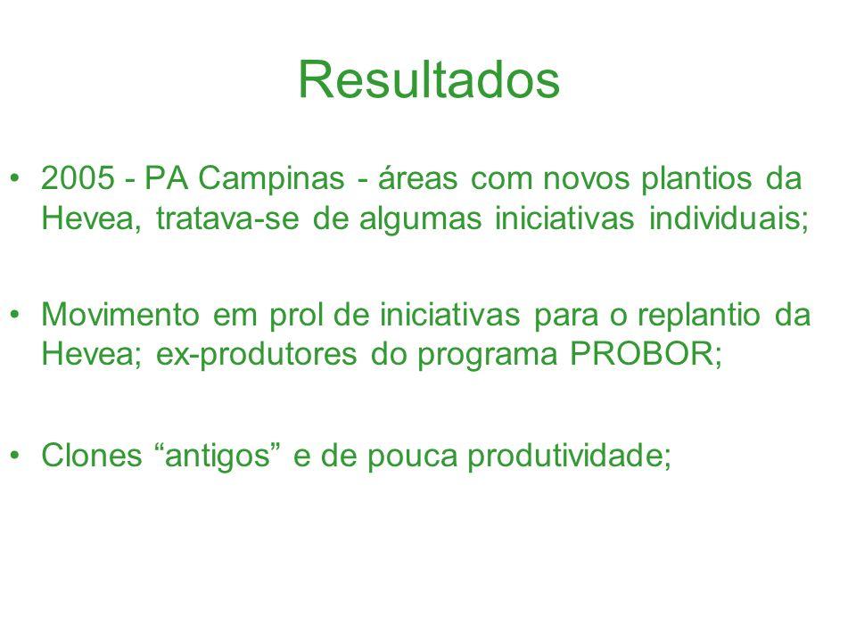 Resultados 2005/2006 - 100 hectares de Hevea no projeto da Associação dos Pequenos Produtores Rurais Dracena, chamado de projeto Seringal; Novos Clones: 3156, 873 e os recentes PB 314 e ICA 111;