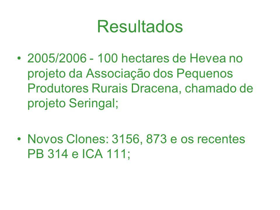 Resultados 2005/2006 - 100 hectares de Hevea no projeto da Associação dos Pequenos Produtores Rurais Dracena, chamado de projeto Seringal; Novos Clone