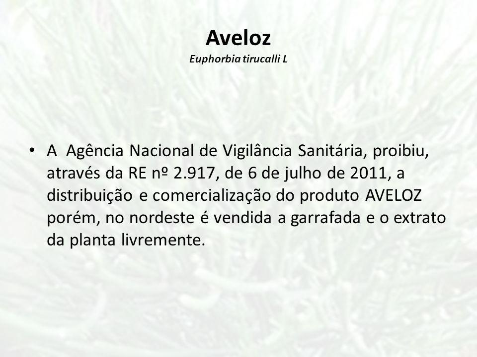 Aveloz Euphorbia tirucalli L A Agência Nacional de Vigilância Sanitária, proibiu, através da RE nº 2.917, de 6 de julho de 2011, a distribuição e come
