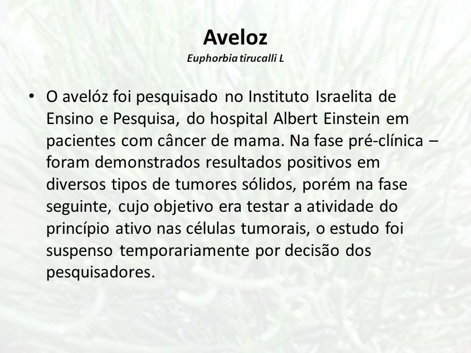 Aveloz Euphorbia tirucalli L O avelóz foi pesquisado no Instituto Israelita de Ensino e Pesquisa, do hospital Albert Einstein em pacientes com câncer