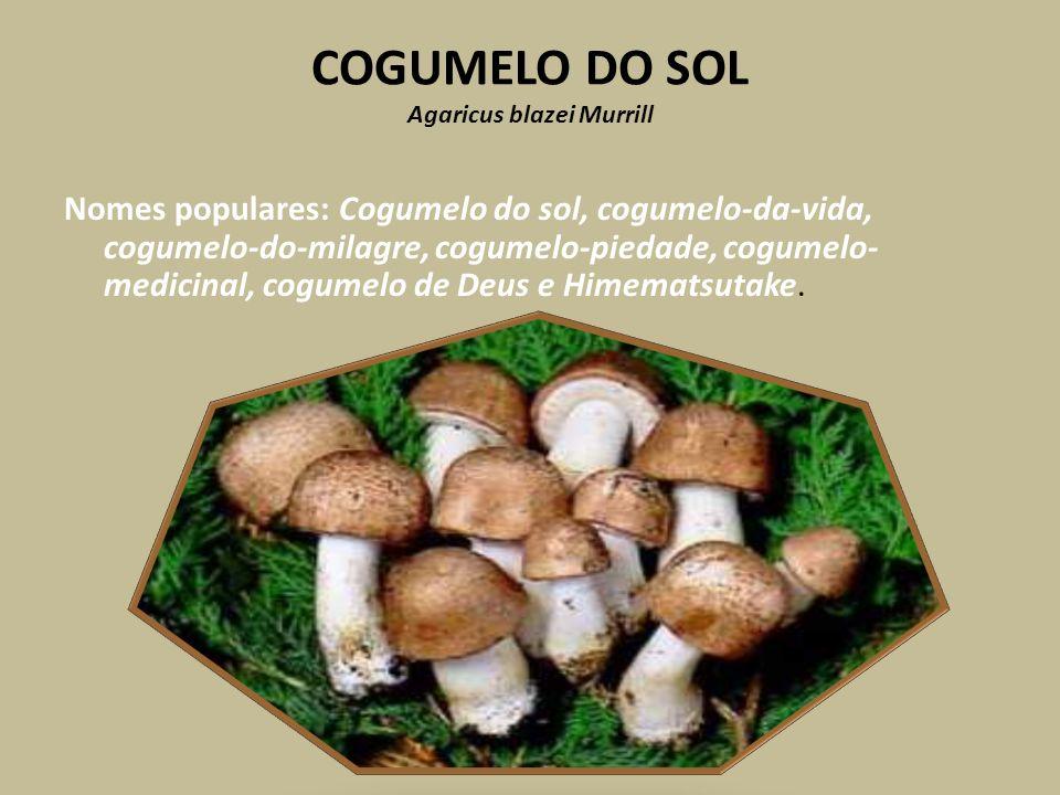 COGUMELO DO SOL Agaricus blazei Murrill Nomes populares: Cogumelo do sol, cogumelo-da-vida, cogumelo-do-milagre, cogumelo-piedade, cogumelo- medicinal