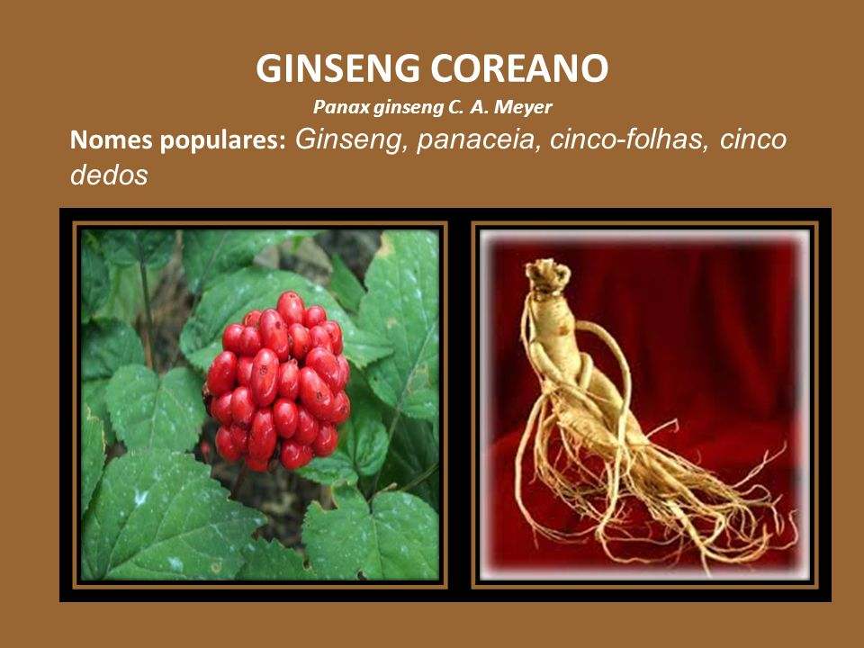 GINSENG COREANO Panax ginseng C. A. Meyer Nomes populares: Ginseng, panaceia, cinco-folhas, cinco dedos
