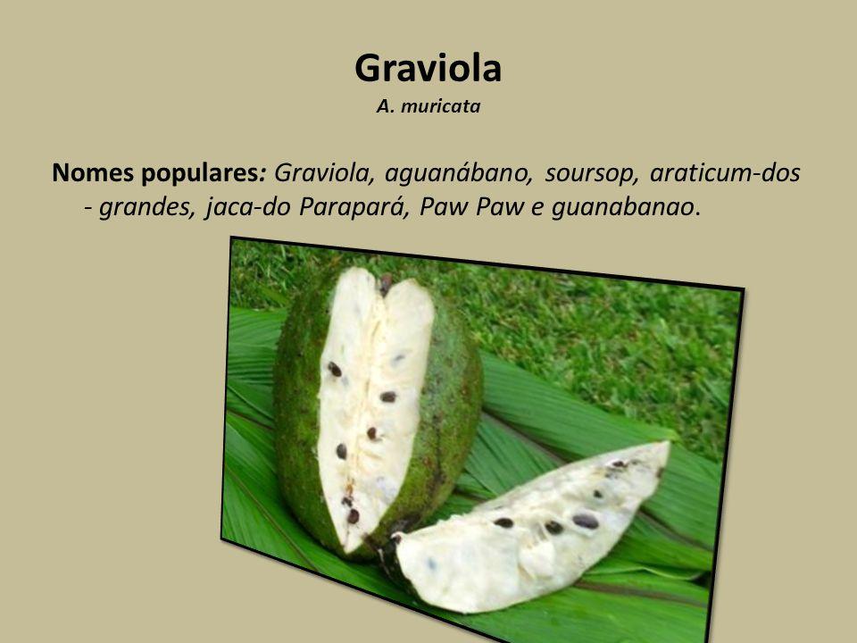 Graviola A. muricata Nomes populares: Graviola, aguanábano, soursop, araticum-dos - grandes, jaca-do Parapará, Paw Paw e guanabanao.