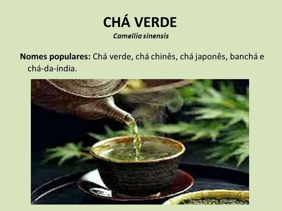 CHÁ VERDE Camellia sinensis Nomes populares: Chá verde, chá chinês, chá japonês, banchá e chá-da-índia.
