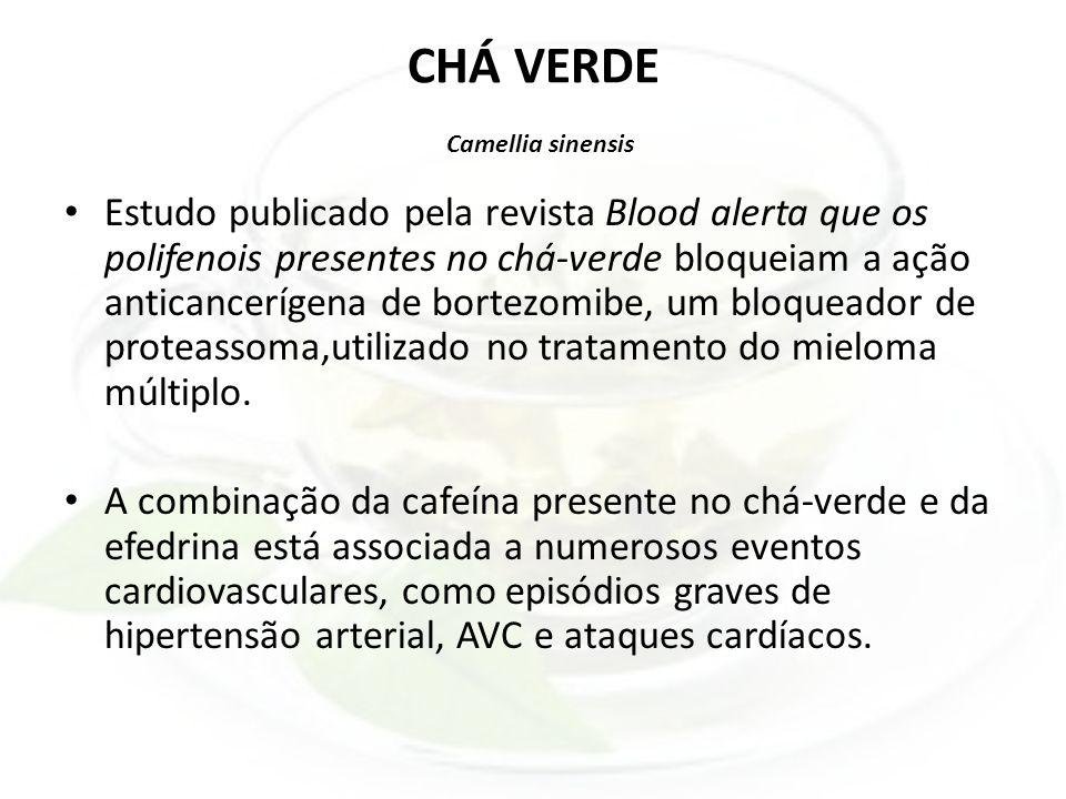 CHÁ VERDE Camellia sinensis Estudo publicado pela revista Blood alerta que os polifenois presentes no chá-verde bloqueiam a ação anticancerígena de bo