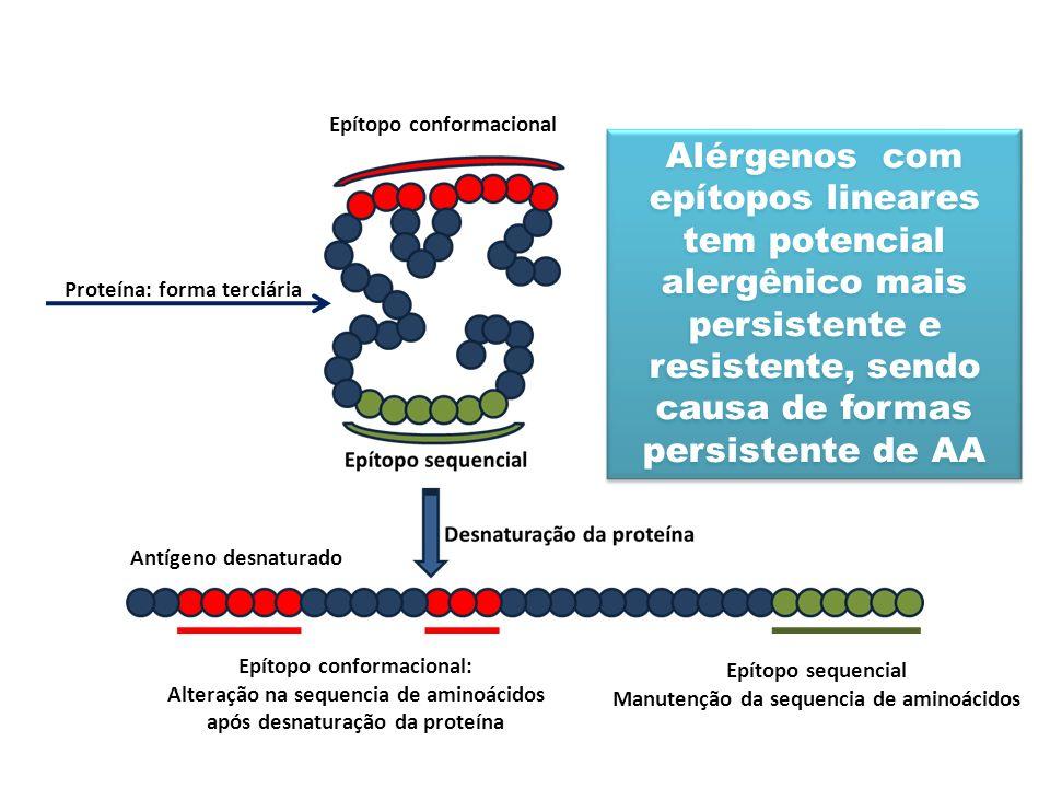 Epítopo conformacional: Alteração na sequencia de aminoácidos após desnaturação da proteína Epítopo sequencial Manutenção da sequencia de aminoácidos Proteína: forma terciária Epítopo conformacional Antígeno desnaturado Alérgenos com epítopos lineares tem potencial alergênico mais persistente e resistente, sendo causa de formas persistente de AA