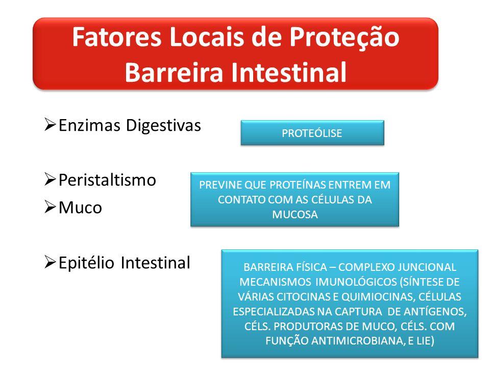 Enzimas Digestivas Peristaltismo Muco Epitélio Intestinal PROTEÓLISE PREVINE QUE PROTEÍNAS ENTREM EM CONTATO COM AS CÉLULAS DA MUCOSA BARREIRA FÍSICA – COMPLEXO JUNCIONAL MECANISMOS IMUNOLÓGICOS (SÍNTESE DE VÁRIAS CITOCINAS E QUIMIOCINAS, CÉLULAS ESPECIALIZADAS NA CAPTURA DE ANTÍGENOS, CÉLS.
