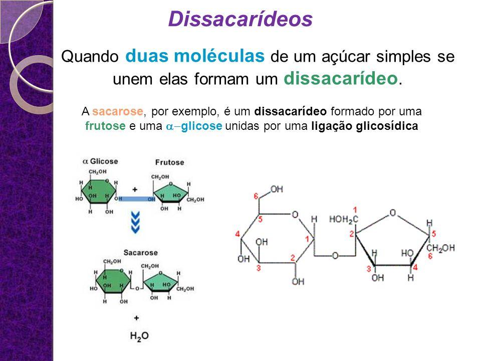 Dissacarídeos Quando duas moléculas de um açúcar simples se unem elas formam um dissacarídeo.