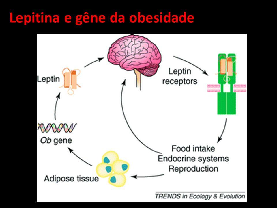 Lepitina e gêne da obesidade