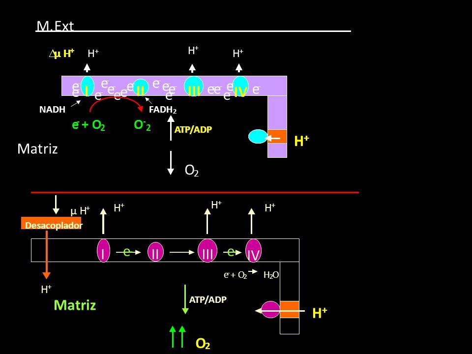 Δ μ H + IIIIII IV H + ATP/ADP e-e- e - + O 2 H 2 O Matriz O 2 Desacoplador H + H + H + H +