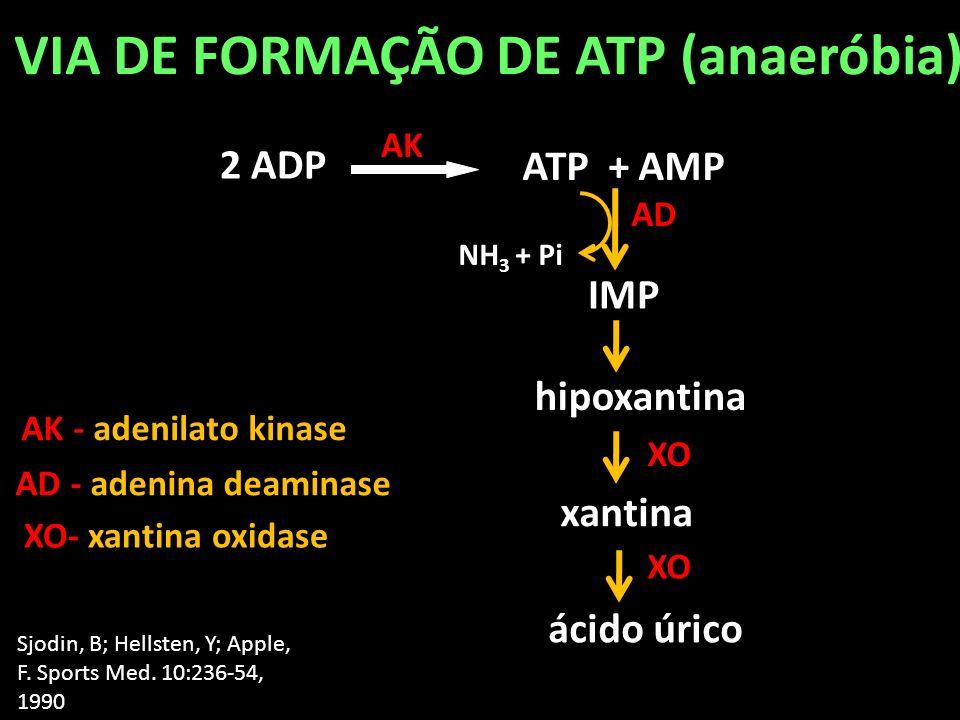 ATP + AMP 2 ADP AK Sjodin, B; Hellsten, Y; Apple, F. Sports Med. 10:236-54, 1990 VIA DE FORMAÇÃO DE ATP (anaeróbia) IMP hipoxantina xantina ácido úric