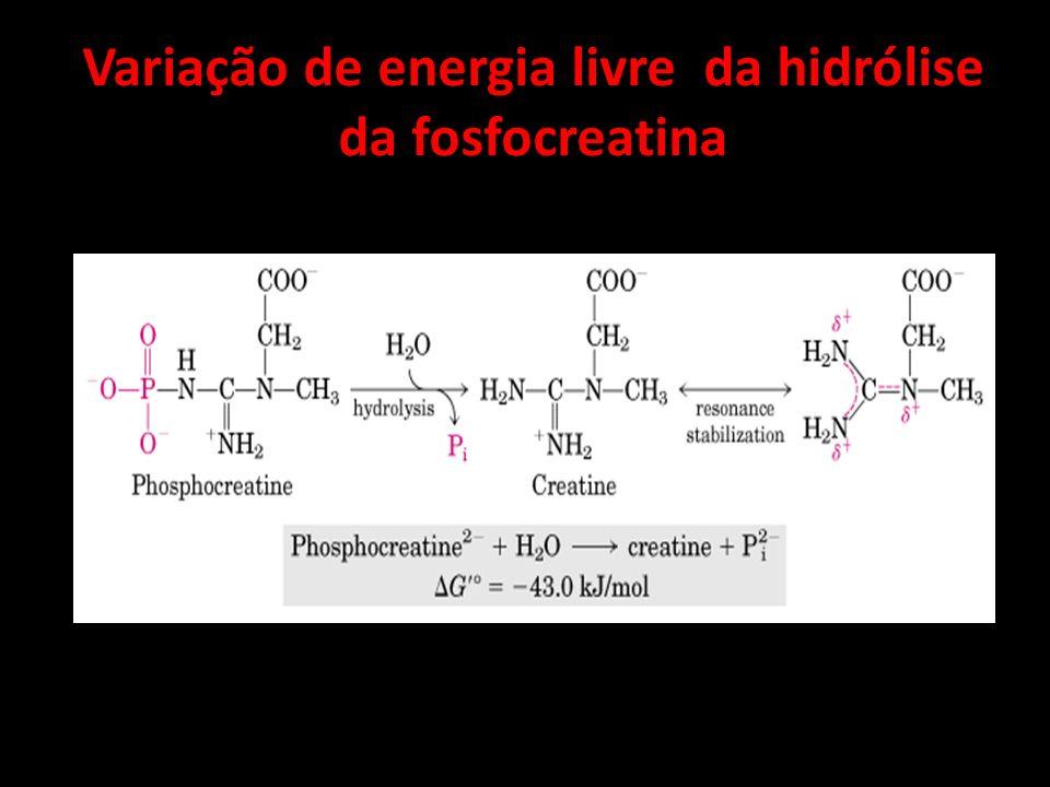 Variação de energia livre da hidrólise da fosfocreatina