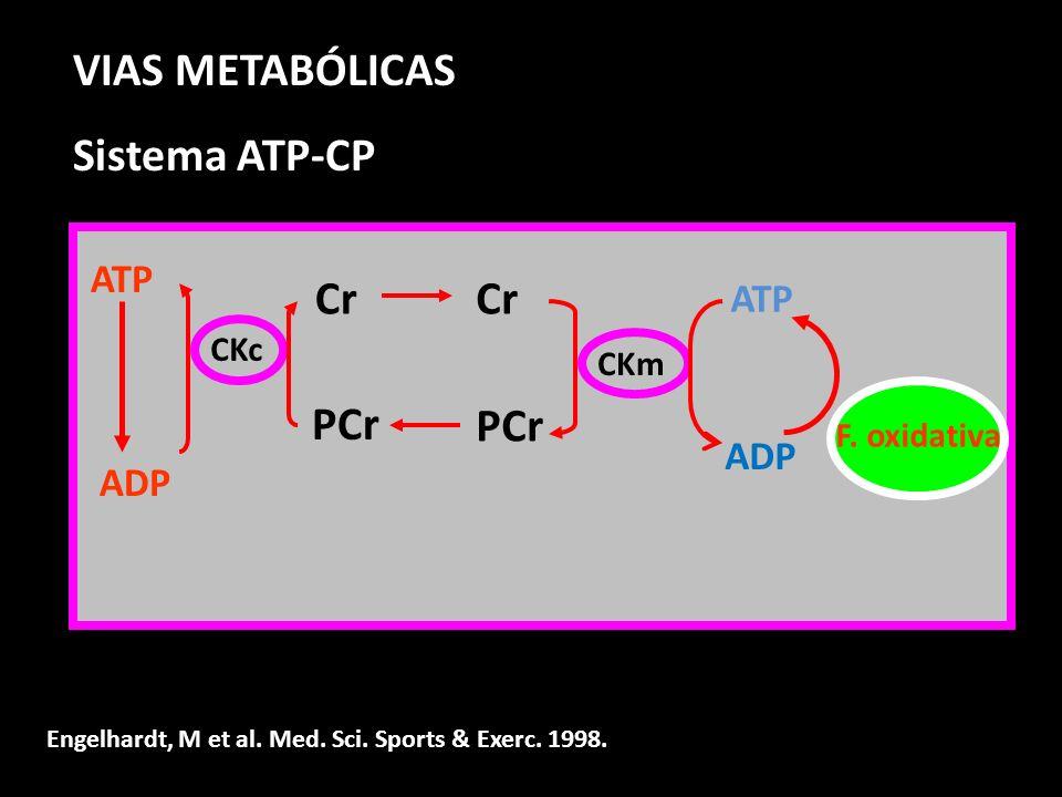 ATP ADP Cr PCr ATP ADP F. oxidativa Cr PCr CKc CKm VIAS METABÓLICAS Sistema ATP-CP Engelhardt, M et al. Med. Sci. Sports & Exerc. 1998.