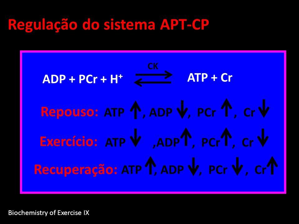 ADP + PCr + H + CK ATP + Cr Repouso: ATP, ADP, PCr, Cr Exercício: ATP,ADP, PCr, Cr Recuperação: ATP, ADP, PCr, Cr Regulação do sistema APT-CP Biochemi