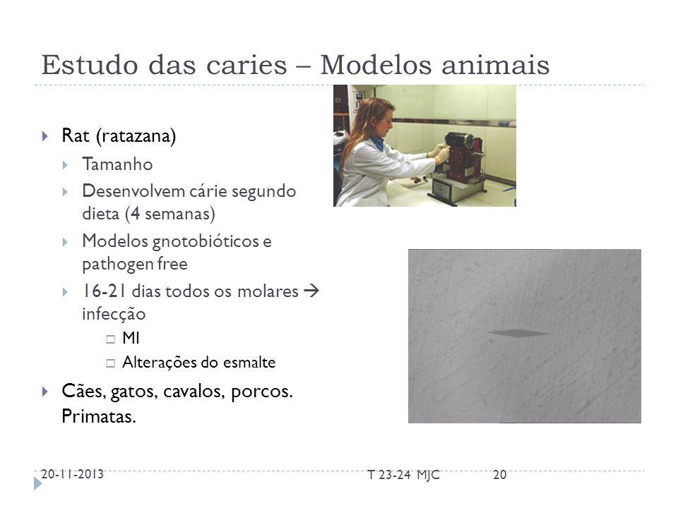 Estudo das caries – Modelos animais Rat (ratazana) Tamanho Desenvolvem cárie segundo dieta (4 semanas) Modelos gnotobióticos e pathogen free 16-21 dia