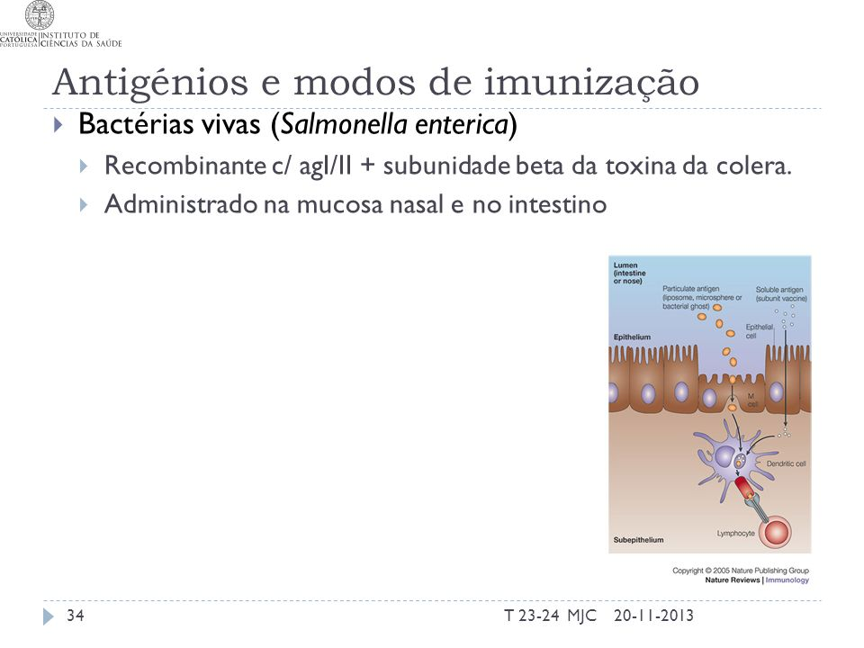 Antigénios e modos de imunização Bactérias vivas (Salmonella enterica) Recombinante c/ agI/II + subunidade beta da toxina da colera. Administrado na m