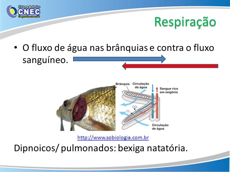 Respiração O fluxo de água nas brânquias e contra o fluxo sanguíneo. Dipnoicos/ pulmonados: bexiga natatória. http://www.sobiologia.com.br