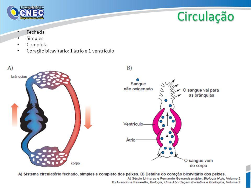 Circulação Fechada Simples Completa Coração bicavitário: 1 átrio e 1 ventrículo