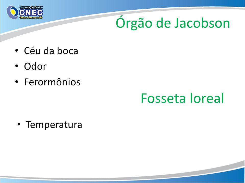 Órgão de Jacobson Céu da boca Odor Ferormônios Fosseta loreal Temperatura