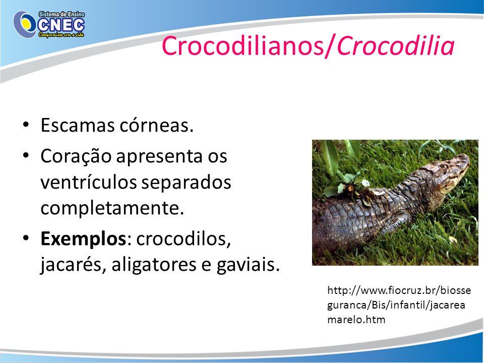Crocodilianos/Crocodilia Escamas córneas. Coração apresenta os ventrículos separados completamente. Exemplos: crocodilos, jacarés, aligatores e gaviai