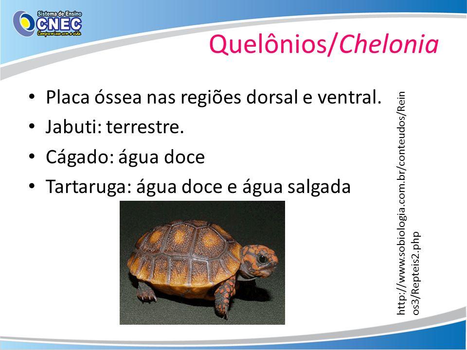 Quelônios/Chelonia Placa óssea nas regiões dorsal e ventral. Jabuti: terrestre. Cágado: água doce Tartaruga: água doce e água salgada http://www.sobio