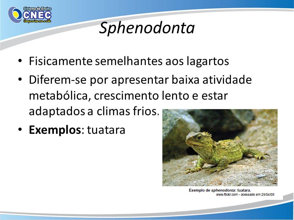 Sphenodonta Fisicamente semelhantes aos lagartos Diferem-se por apresentar baixa atividade metabólica, crescimento lento e estar adaptados a climas fr