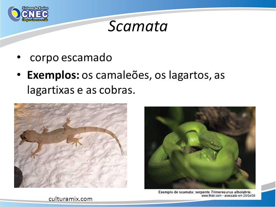 Scamata corpo escamado Exemplos: os camaleões, os lagartos, as lagartixas e as cobras. culturamix.com