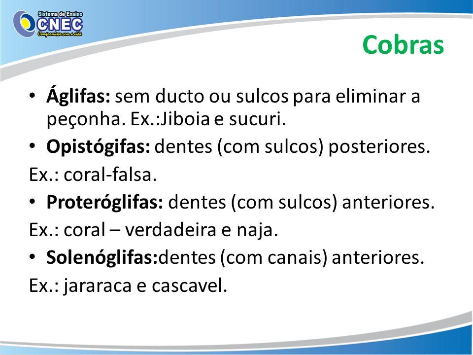 Cobras Áglifas: sem ducto ou sulcos para eliminar a peçonha. Ex.:Jiboia e sucuri. Opistógifas: dentes (com sulcos) posteriores. Ex.: coral-falsa. Prot
