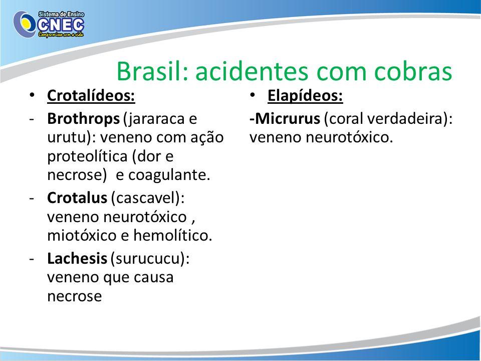 Brasil: acidentes com cobras Crotalídeos: -Brothrops (jararaca e urutu): veneno com ação proteolítica (dor e necrose) e coagulante. -Crotalus (cascave