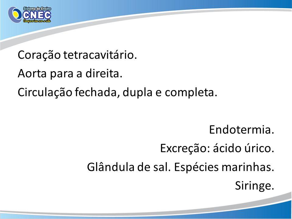 Coração tetracavitário. Aorta para a direita. Circulação fechada, dupla e completa. Endotermia. Excreção: ácido úrico. Glândula de sal. Espécies marin