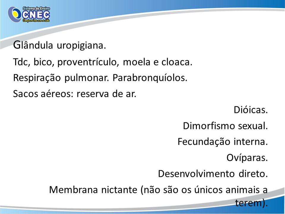 G lândula uropigiana. Tdc, bico, proventrículo, moela e cloaca. Respiração pulmonar. Parabronquíolos. Sacos aéreos: reserva de ar. Dióicas. Dimorfismo